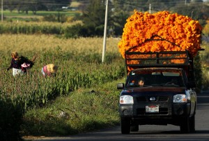 La flor que inunda México para el Día de Muertos (fotos)