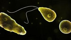 Funcionarios de la Salud en Florida confirmaron el caso de una extraña ameba que come el cerebro