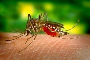 Al menos 4 personas contraen el virus del Nilo Occidental en Miami-Dade