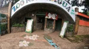 """""""No nos abandonen"""": Zoológico nacional de Nicaragua impactado por escasos fondos en plena pandemia"""