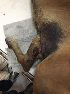 PoliChacao metió preso individuo que golpeó a un perro con un amortiguador (fotos)