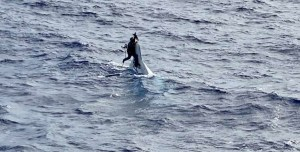 Lo encontraron aferrado a un bote volcado en Florida luego de estar dos días desaparecido