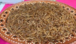 Europa certificó a un gusano como alimento seguro para el consumo humano