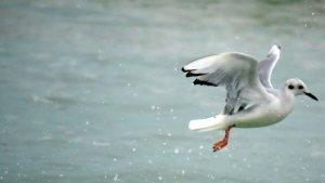 """Descubrieron la existencia de un ave """"extremadamente rara"""" en Florida"""