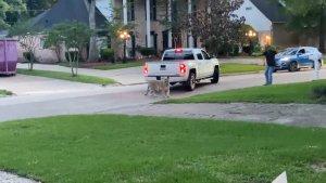 Pánico en Houston: Captaron a un tigre mientras se paseaba en un vecindario (Videos)