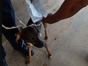 "Capturaron a ""perro cartero"" que intercambiaba correspondencia entre presos panameños"