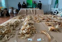 Incautaron en el aeropuerto de Bogotá más de tres mil aletas de tiburón que iban a China (Fotos)