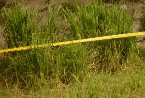 Crimen atroz en Colombia: Un hombre le disparó a otro, lo desmembró y luego intentó lanzarlo a un río