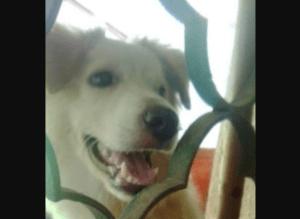 Frente a sus hijas, despiadado sujeto apaleó hasta la muerte a un perrito en Chacao
