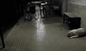 """""""Fantasma"""" de una anciana se paseó en silla de ruedas por los pasillos de un hospital (VIDEO)"""